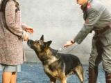Psi vystupující v seriálu.